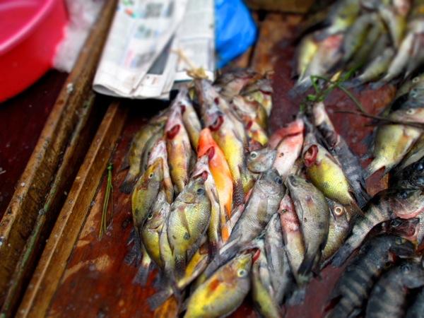 Granada, Nicaragua fish market