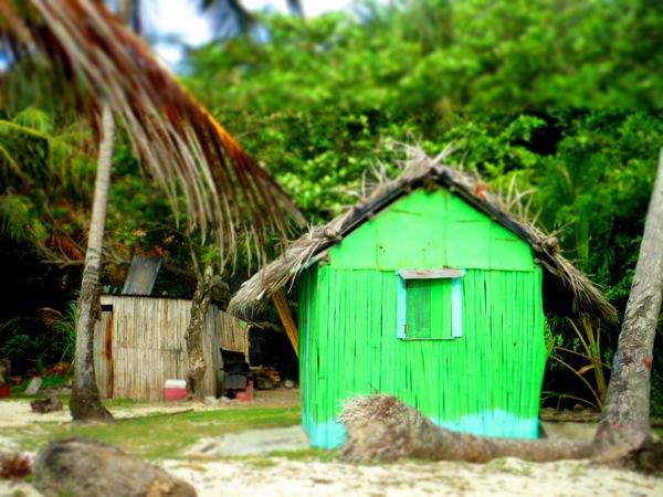 Little Corn Island Stedman's