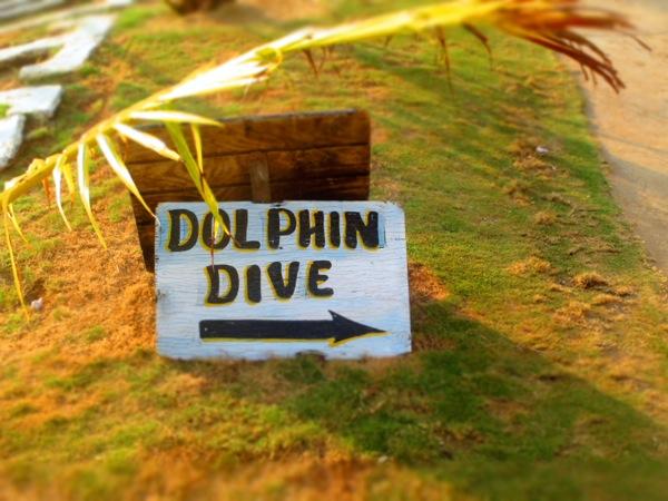 Little Corn Island Dolphin Dive