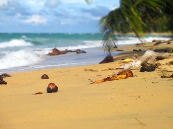 arrecife punta uva