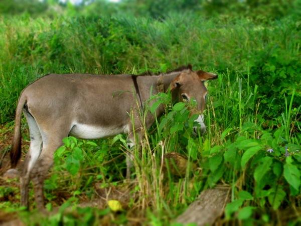 donkey colombia