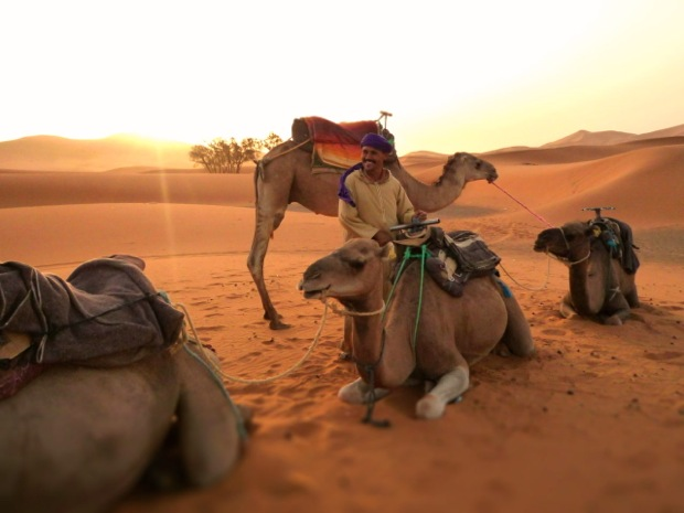 sahara desert camels