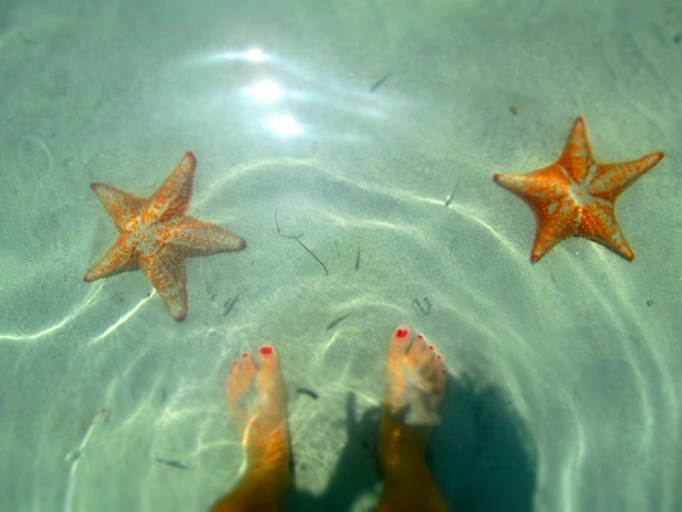 starfish beach bocas del toro