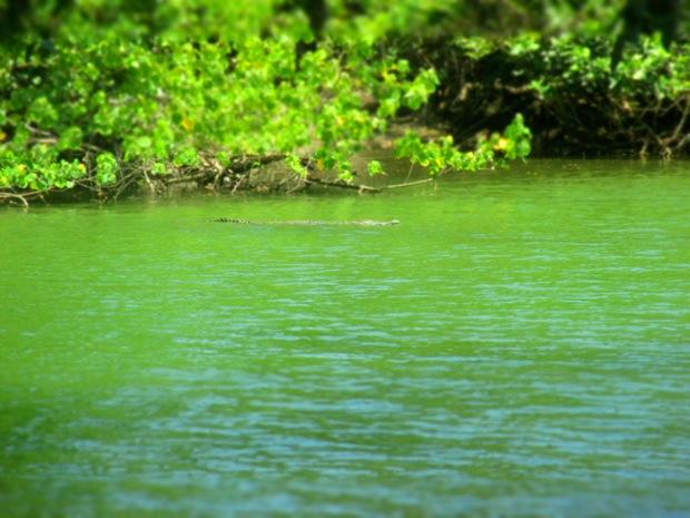 la sirena river