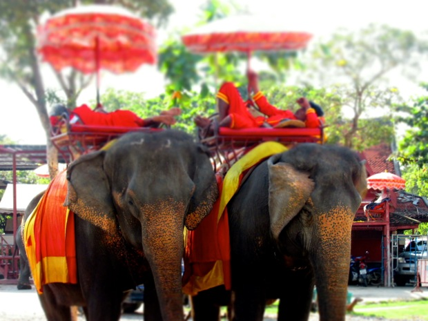 Ayutthaya elephants