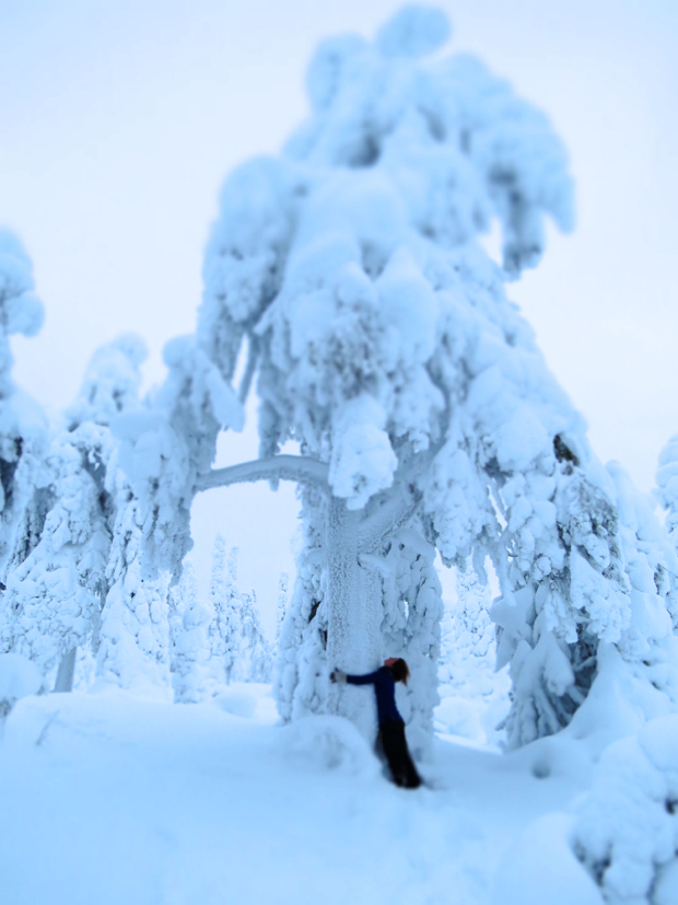 How to Survive Winter in Lapland - 006