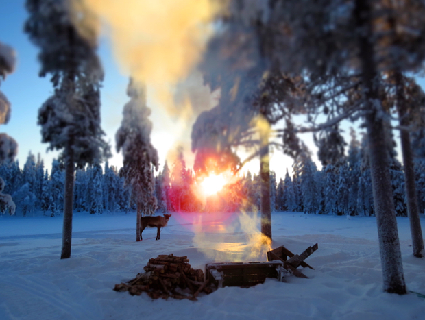 How to Survive Winter in Lapland