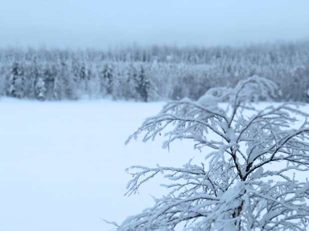 How to Survive Winter in Lapland - 065
