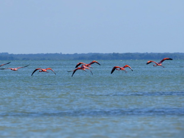 Isla Holbox