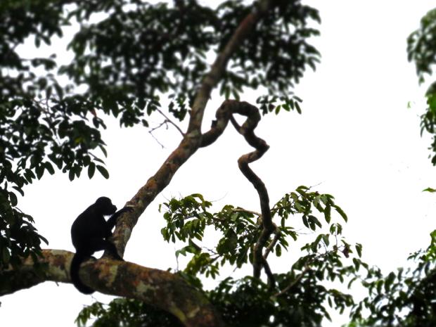 Costa Rica10