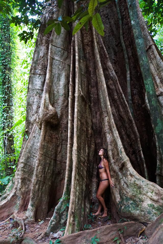 Thailand tall-5